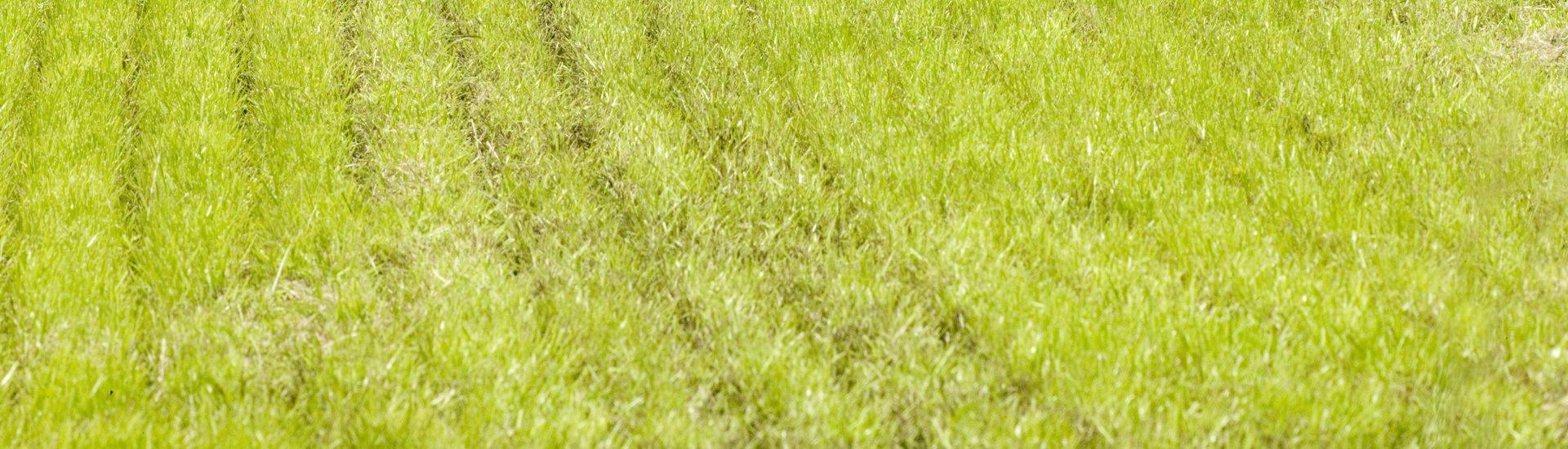 Schuitemaker Exacta grassland injector